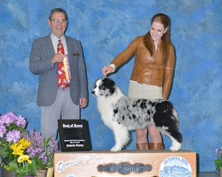 Prada wins the breed first time out as a specia at Elma show!