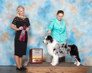 Prada takes 2nd in the open blue class under Senior Breeder judge Connie Blowers