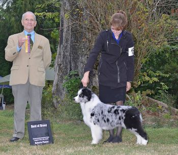 Prada wins the breed both days at the Sammamish KC show