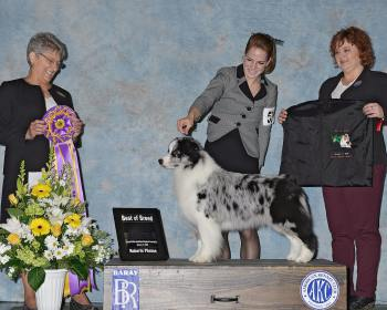 Prada wins BISS under Breeder Judge Susan Landy Whiticar